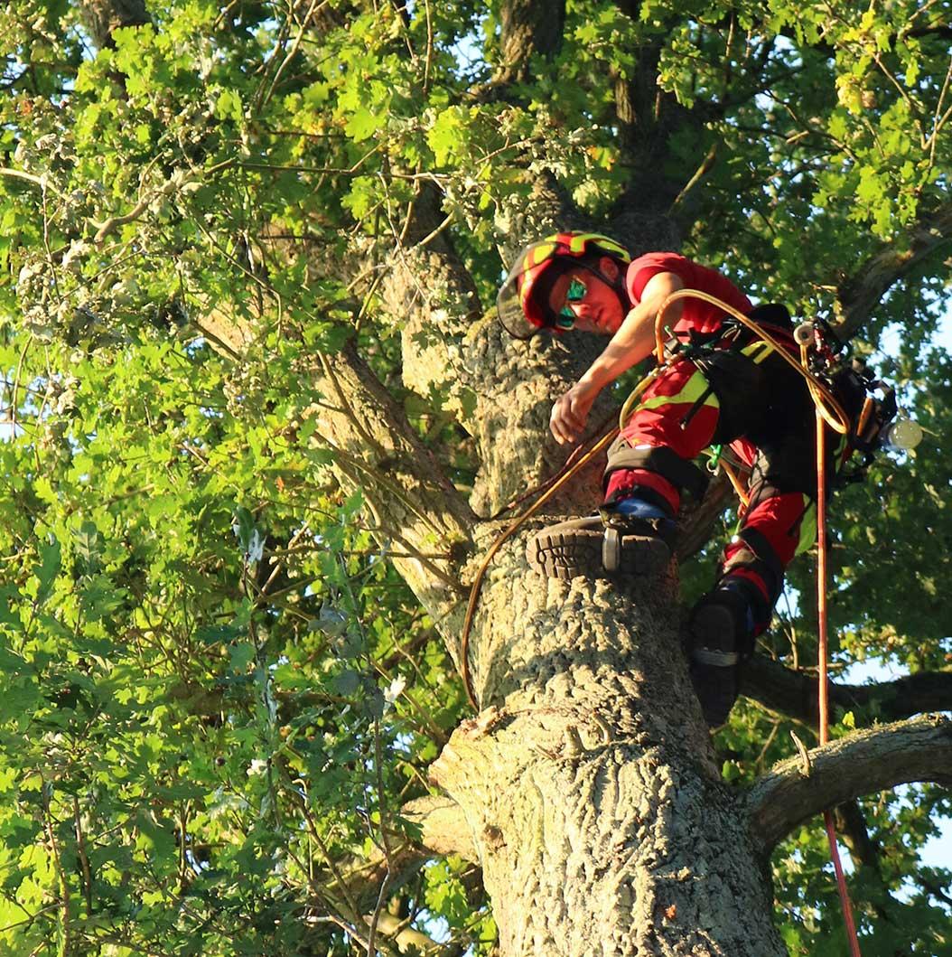 Die Baumhelden sind Ihr Partner, wenn es um das Fällen von Bäumen geht.
