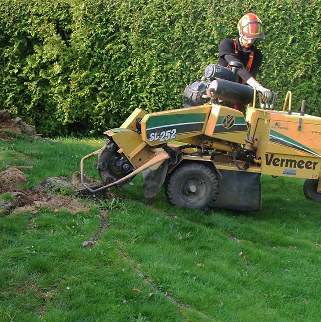 Die Baumhelden führen eine fachgemäße Kontrolle Ihrer Bäume in Saarlouis und Umgebung durch.