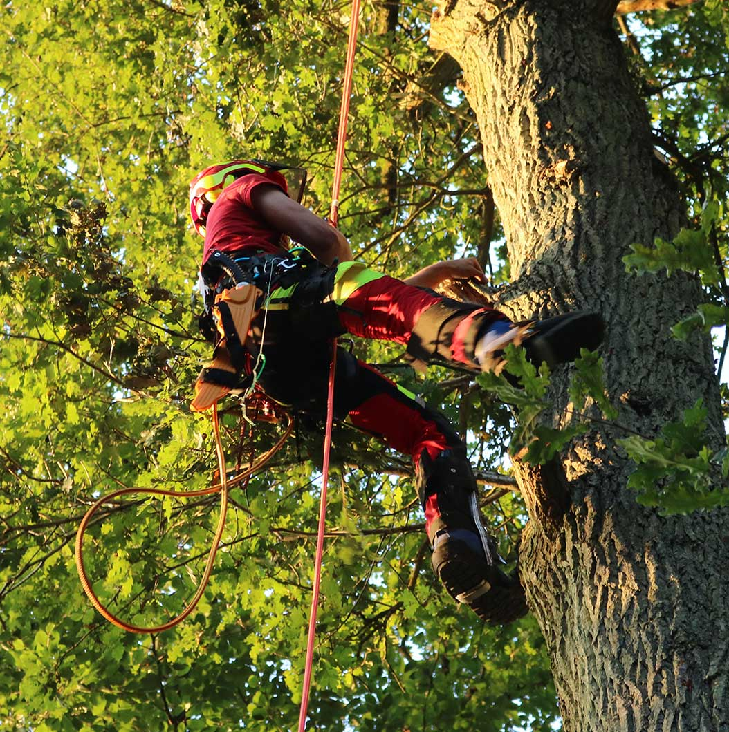 Baumhelden - Ihr Partner für Baumpflege in Saarlouis und Umgebung