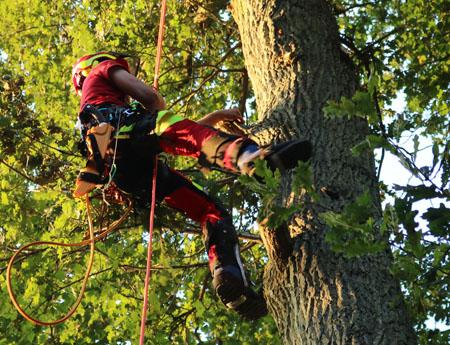 Die Baumhelden bieten Baumpflegearbeiten, Baumkontrolle und Baumfällungen im Saarland an.